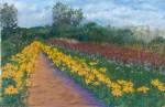 Flower Field #2