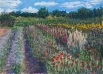 Farm Flower Field#1