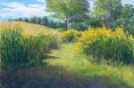 Goldenrod, Maine AudubonField